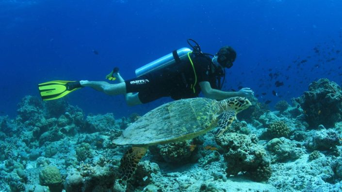 Scuba diving Maldives turtles