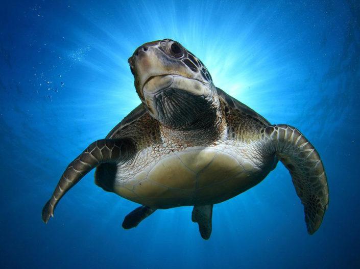 Maldives Marine Biology Turtle Safari