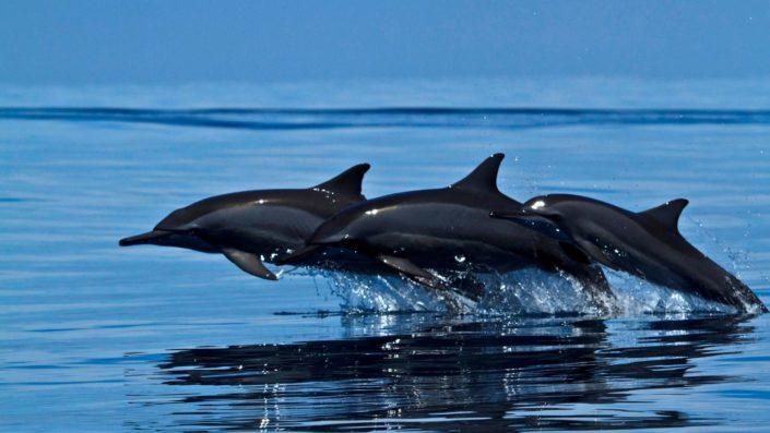 Maldives Dolphin Cruise