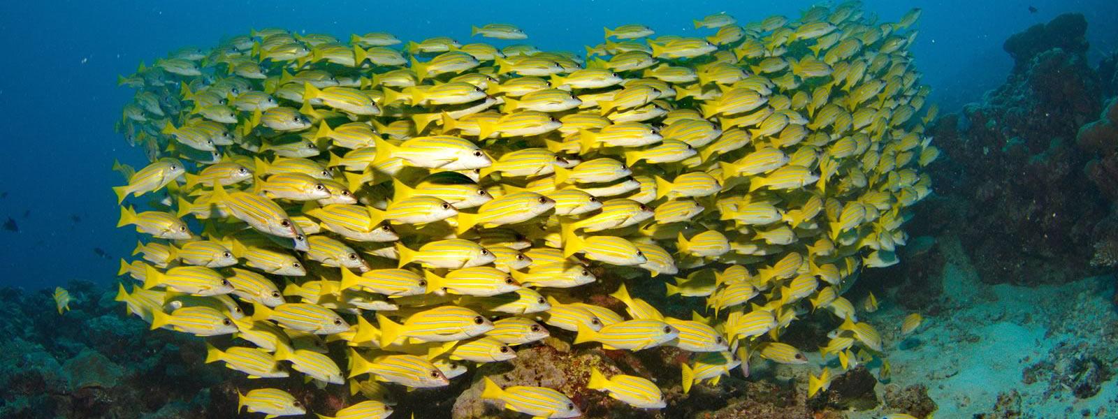 Maldives Scuba Diving