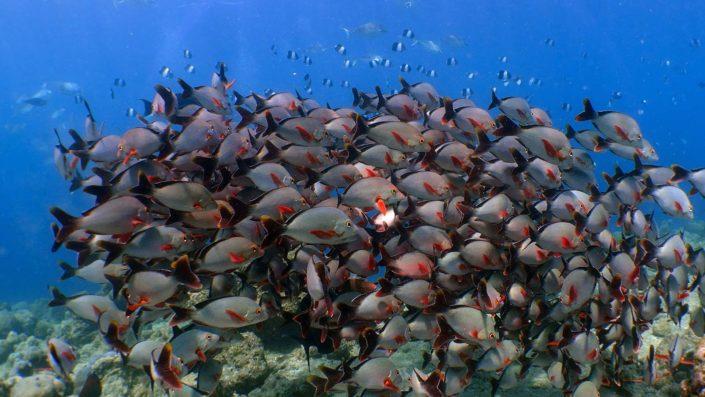 Maldives Snorkelling Marine Life