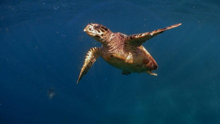 Turtle Safari Maldives