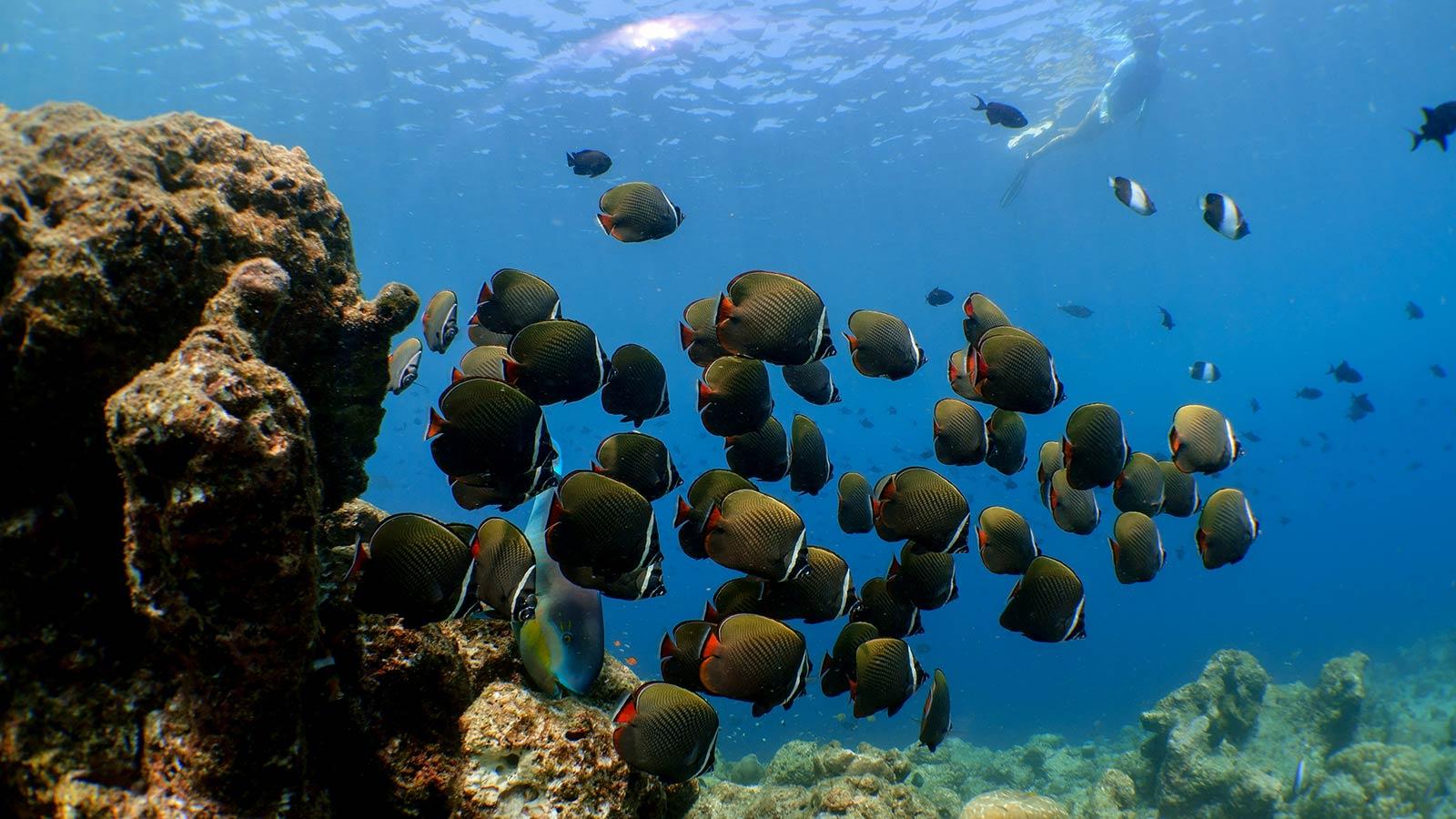 Maldives Excursions