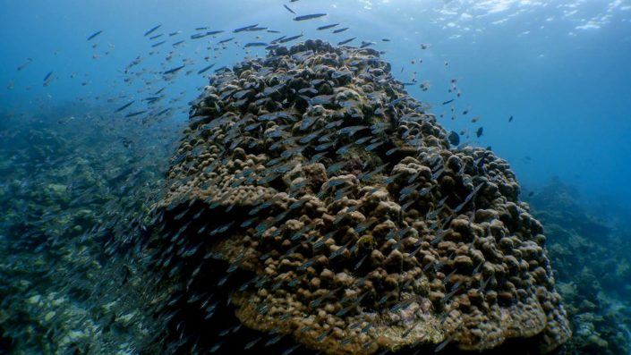 Maldives Snorkelling Diving