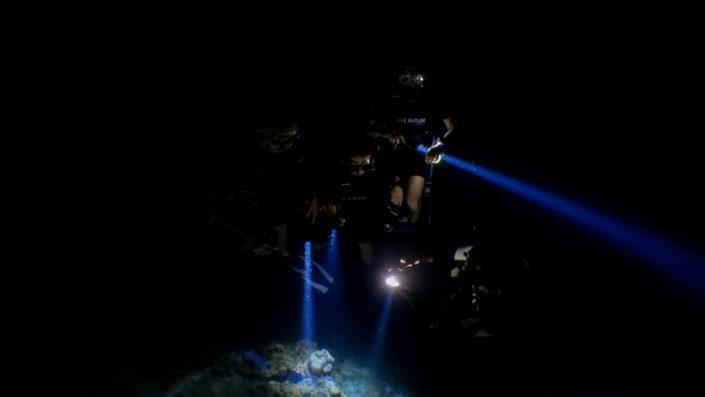 Night Dive Maldives