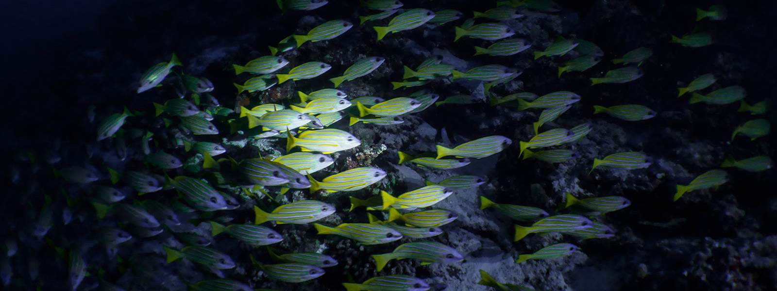 Night dives maldives