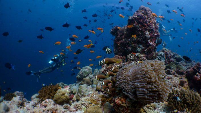 Maldives Scuba Diving Beginner Courses