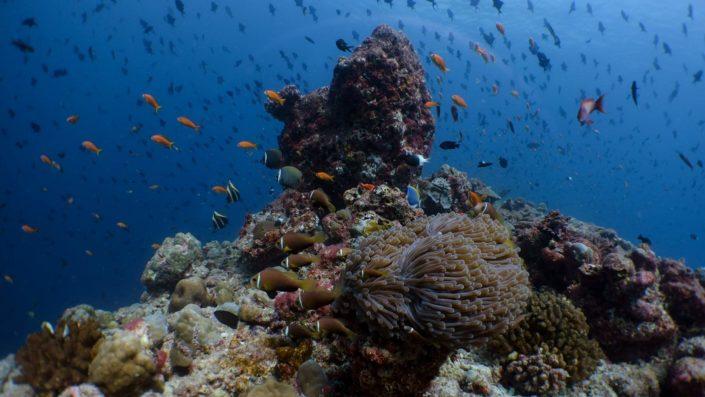 Maldives Scuba Diving Snorkelling